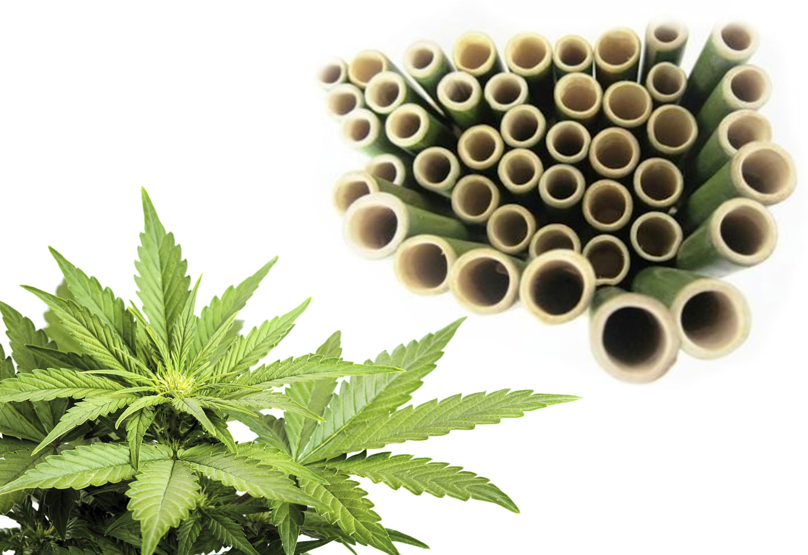 THE SOLUTION - Hemp replaces oil. Bamboo replaces coal.