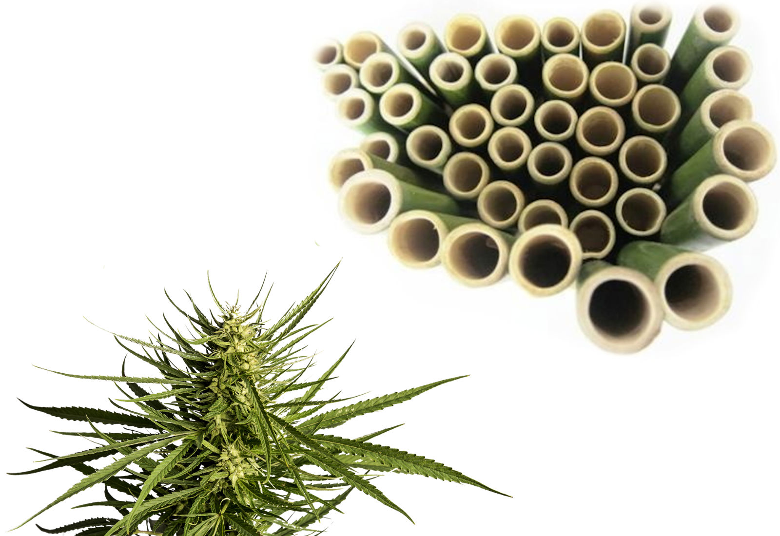 Hemp replaces Oil. Bamboo replaces Coal.