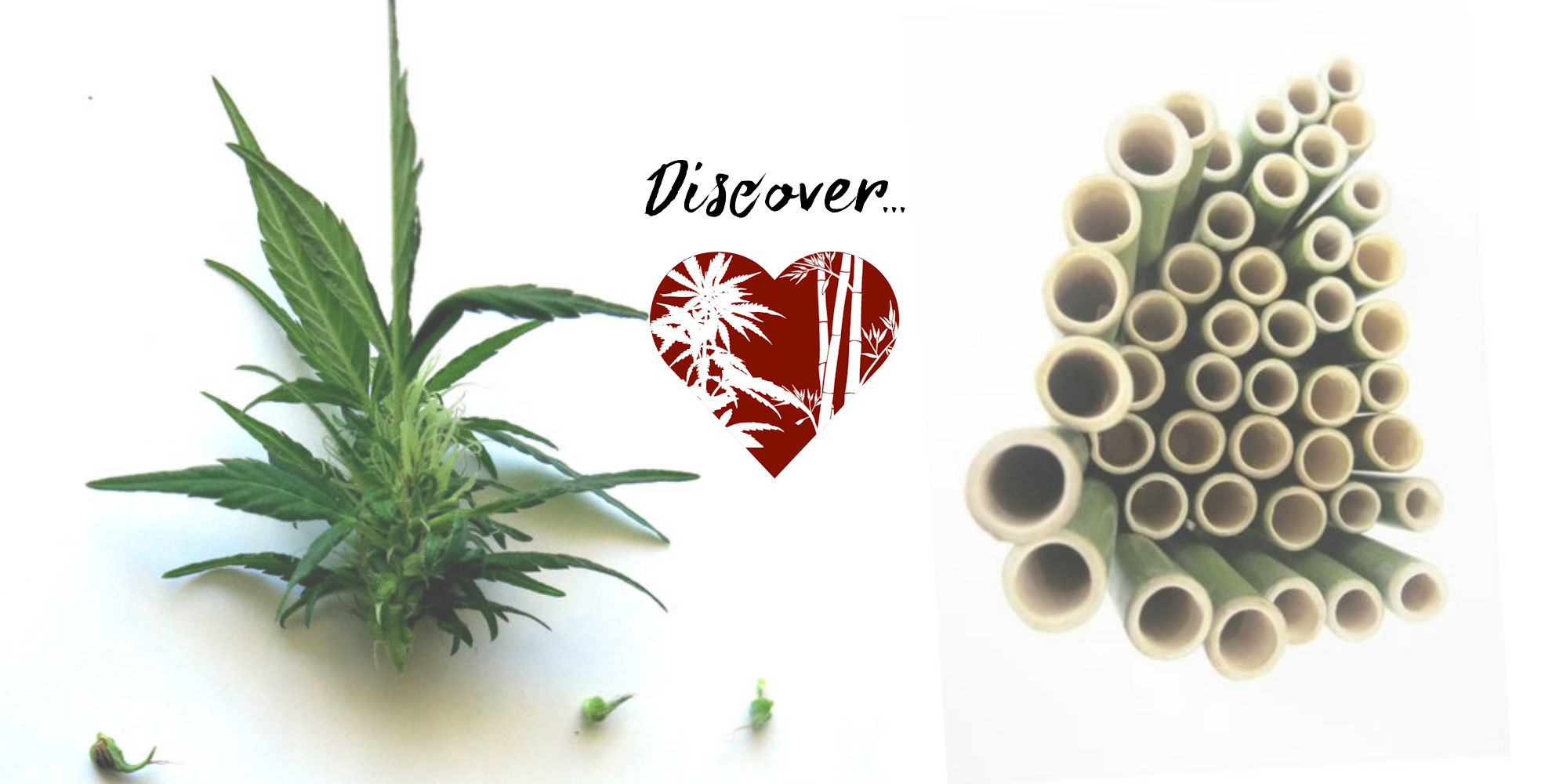 Hemp & Bamboo - Hemp = Oil, Bamboo + Coal. These two plants pose a threat to fossil fuel companies. They complement each other in every way. Similar in climate tolerance these two plants can be grown literally anywhere. These two plants can reverse the effects of climate change, a high unemployment economy, and fossil fuel pollution.