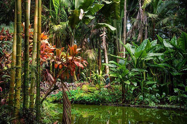 The Big Island is my spirit animal. 🌺