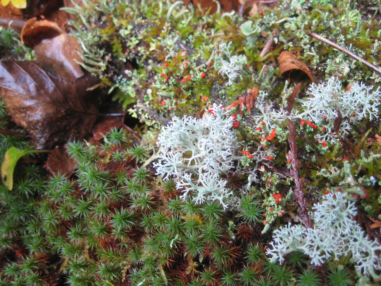 special-10-2010-zzz-lichen2-LoP-aten.jpg