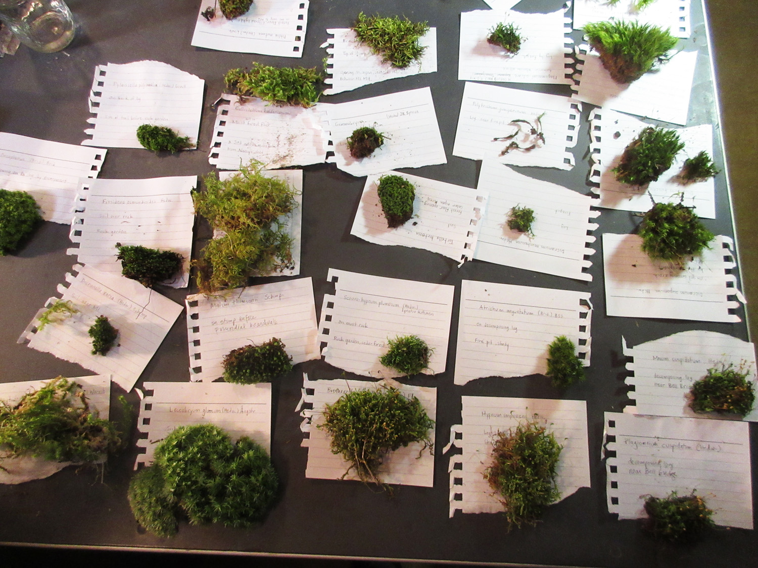 Jamie Ferschinger, moss survey