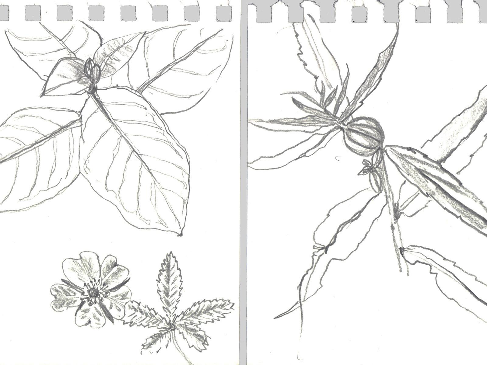 LoP-aten-riveredge-sketches.jpg