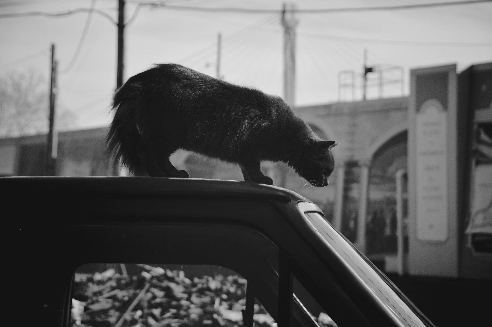 black cat Nikon D3200 18-200mm f:3.5-5.6.jpg