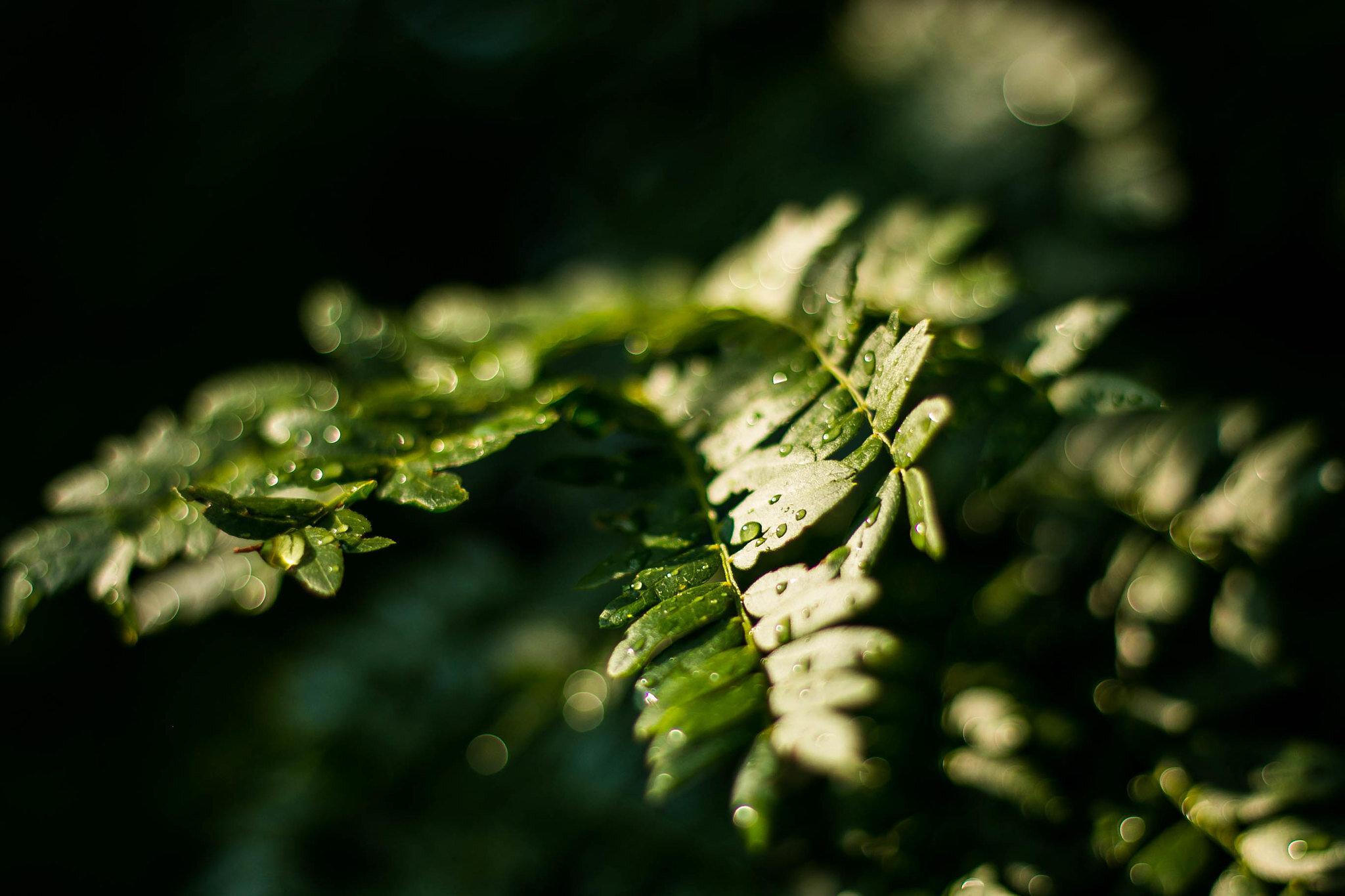 Canon EOS 70D leaf rain.jpg