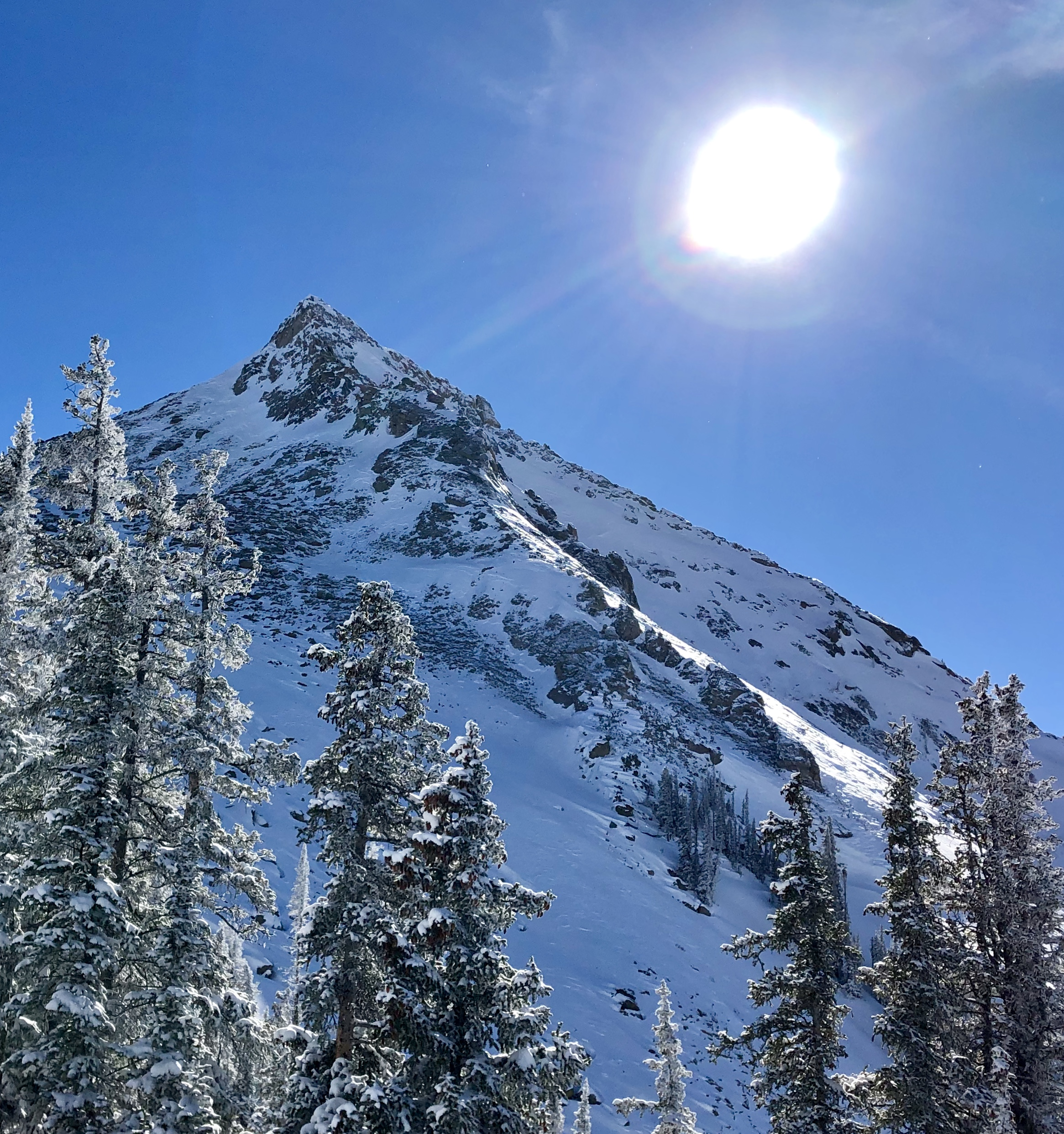 Mount Crested Butte and Engelmann Spruce near it's summit. Partnering with the US Forest Service the Vegetation Management Plan was created to maximize ecological vitality and resiliency of forests within the ski area boundaries.