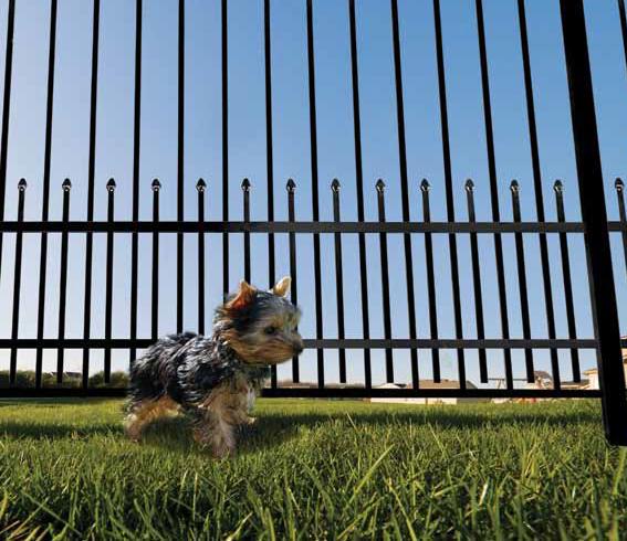 FDD PuppyGuard.jpg