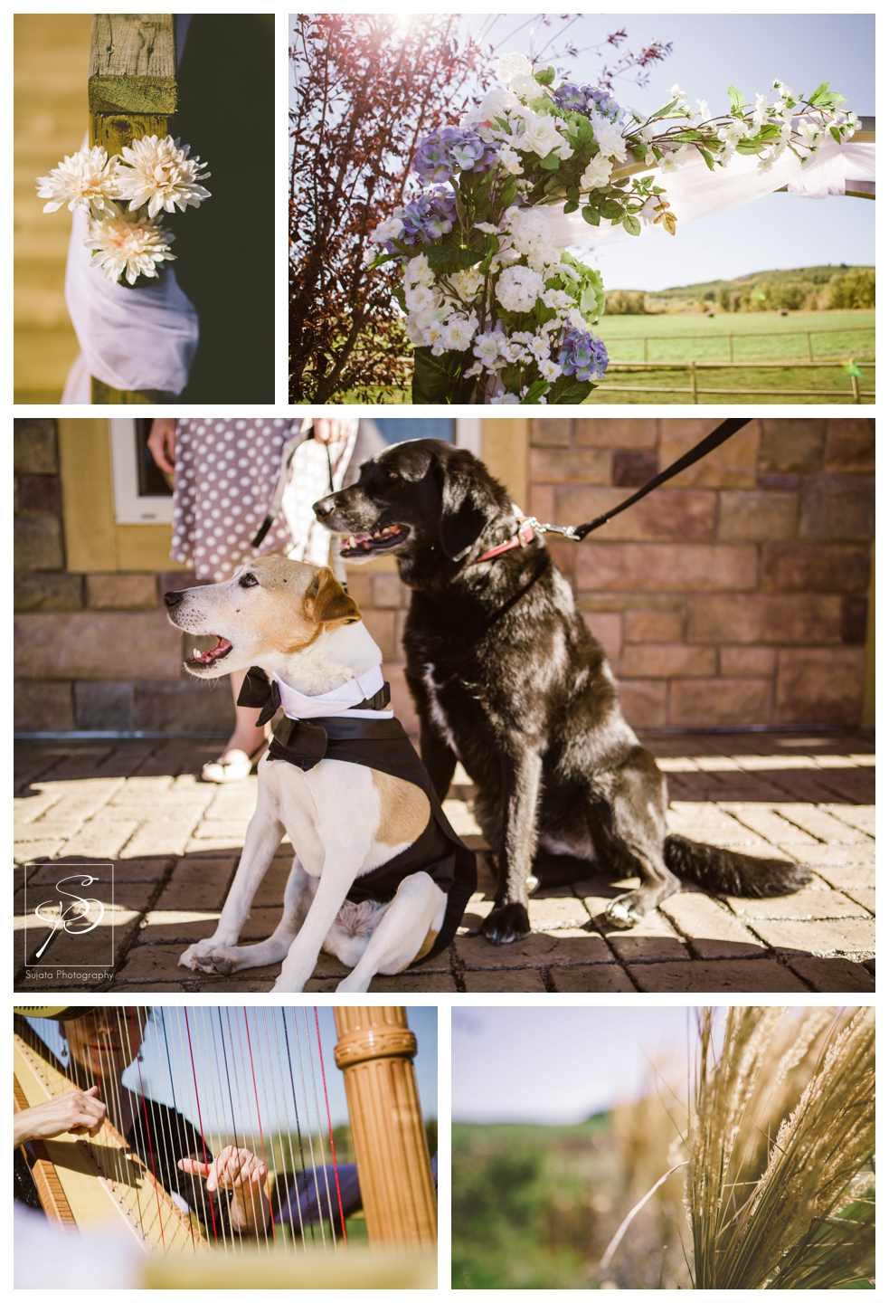 Dogs and other ceremony details