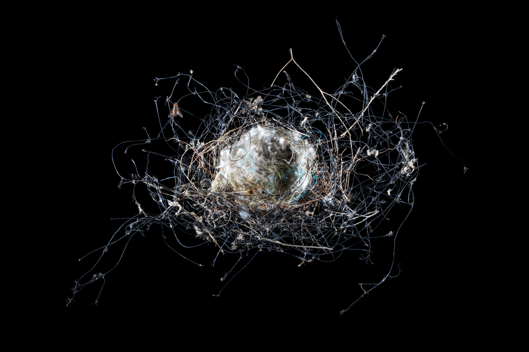 Found bird's nest of plastic netting and other unnatural fibres,  2016  Pigment print on platine fibre paper, 70x110cm