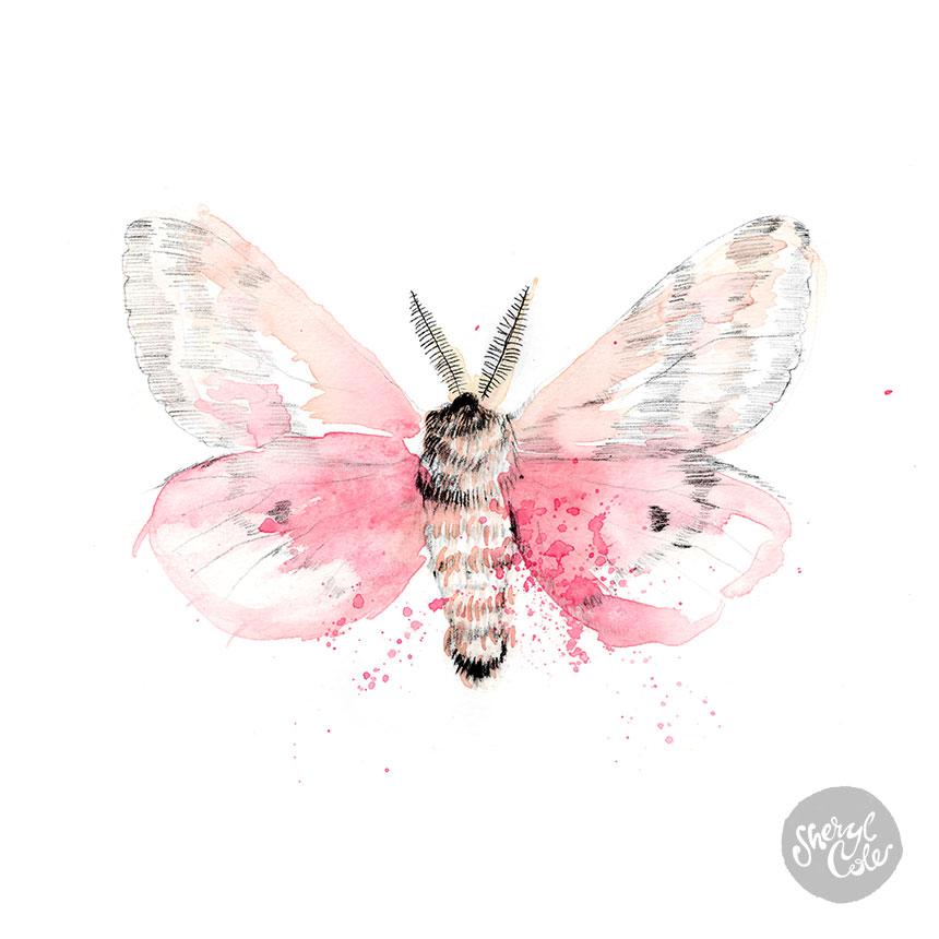 SherylCole_Moth860.jpg