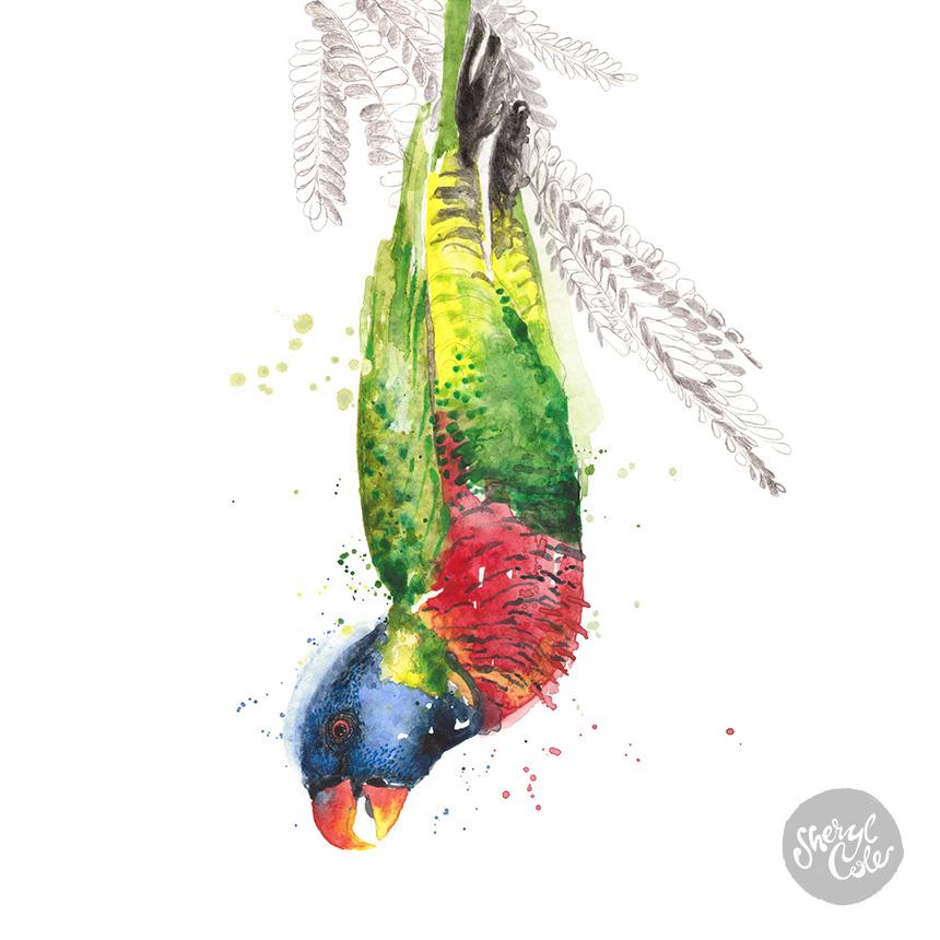 SherylCole_RainbowLorikeet-painting860.jpg