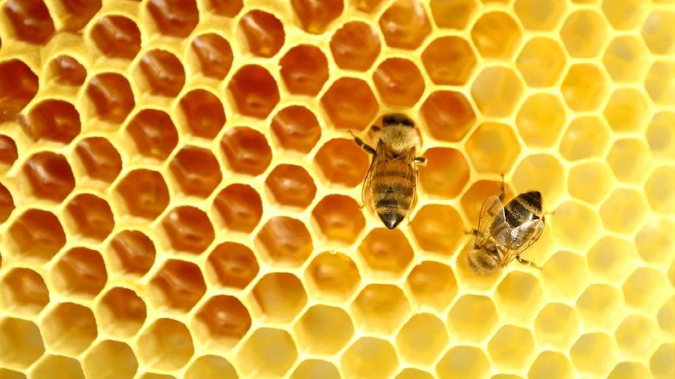 Bees+are+cool%2C+just+not+in+real+life+when+you+see+one%2C+only+in+pictures.jpg