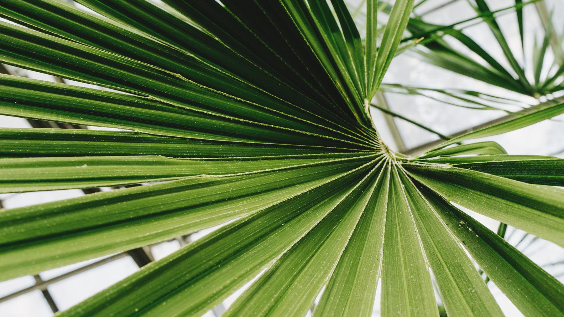 palm-2.jpg