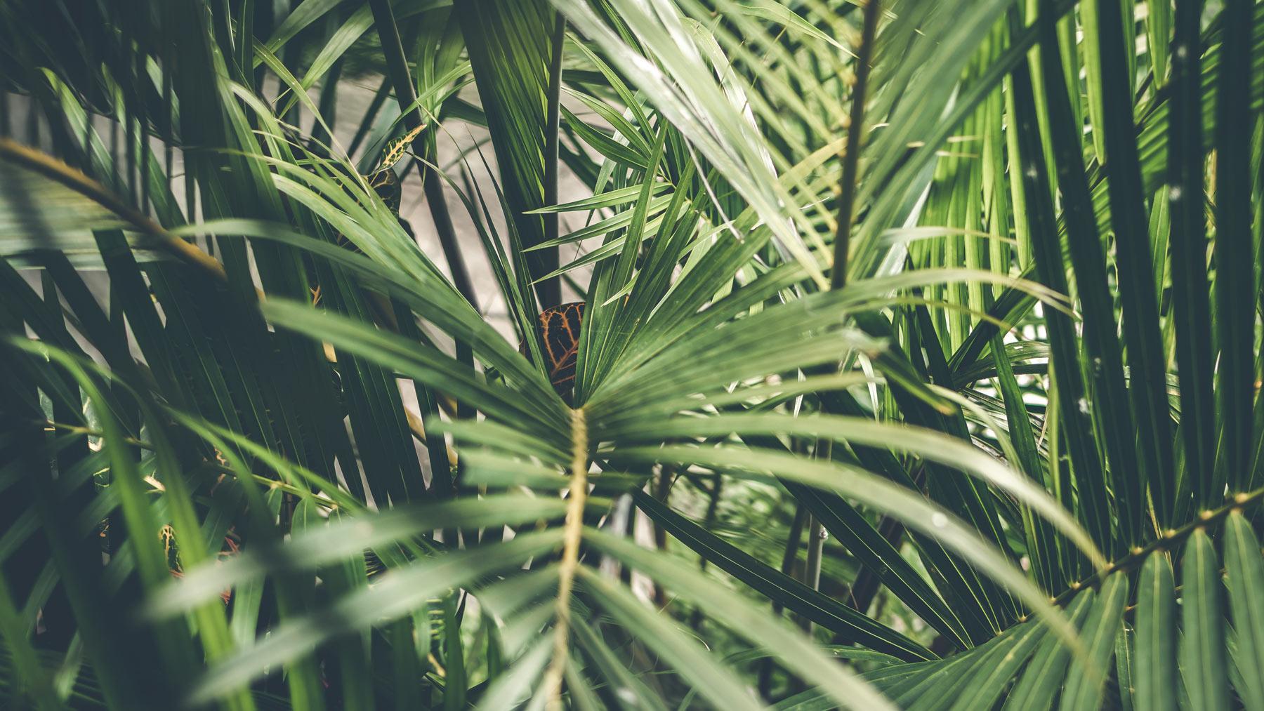 palm-1.jpg