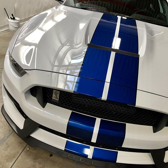 GT 350 - Xpel Ultimate Plus paint protection film on full nose. Contact us today for Xpel film to keep your car chip free. 617-803-7495 bostonexclusive.com #xpel #xpelultimate #bostonexclusive #gt350 #detailersofinstagram #detailingboston #bostondetailing #ford #shelbygt350 #shelby #shelbyclub