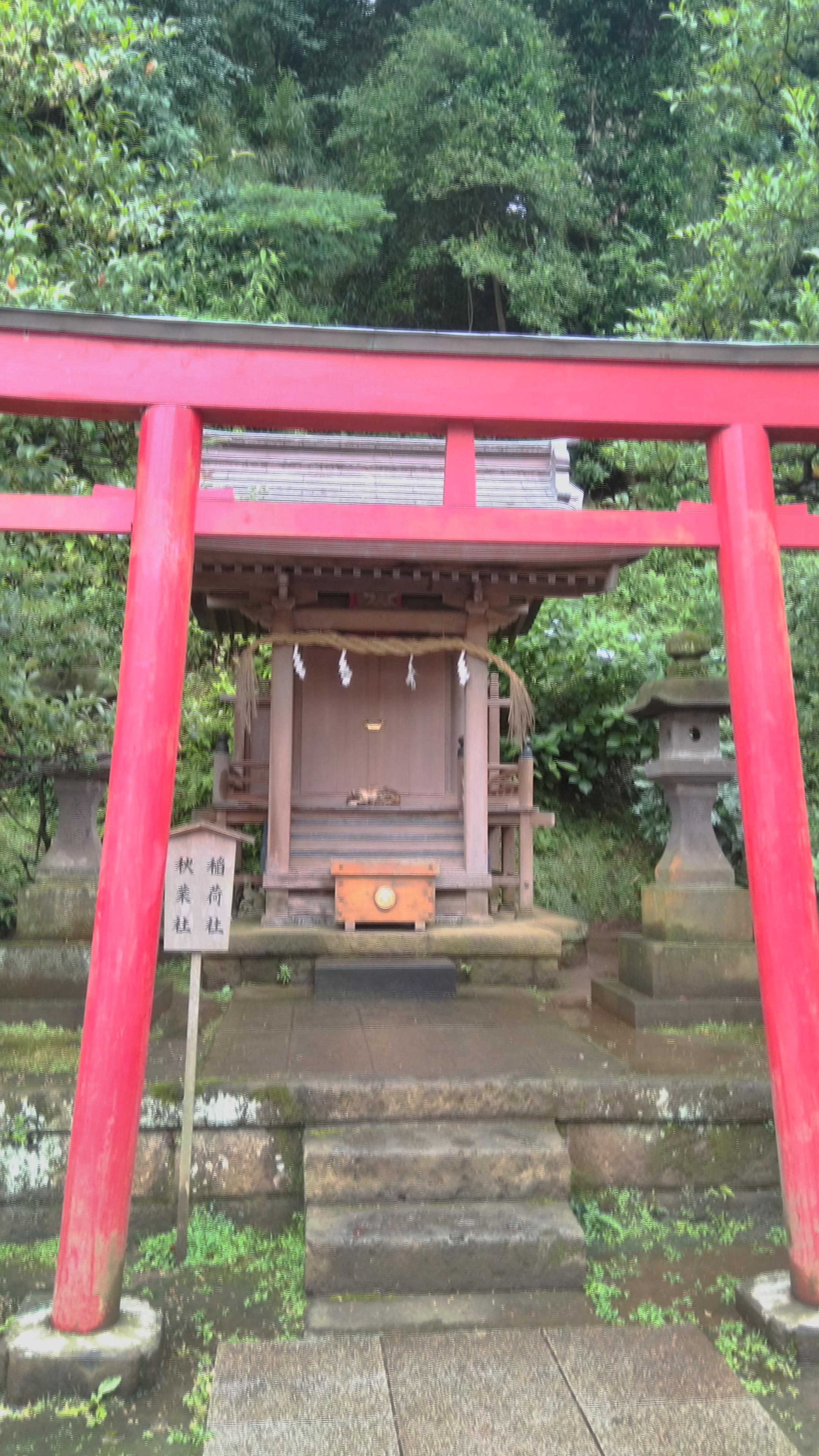 cat.. inside shrine??