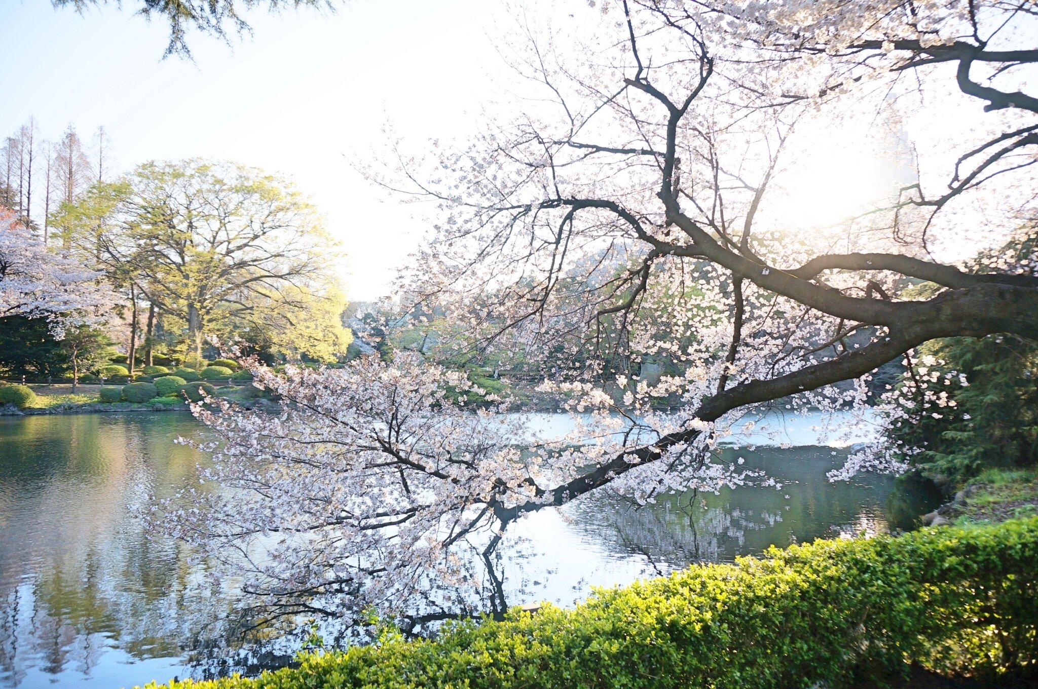 新宿花見_190505_0046.jpg