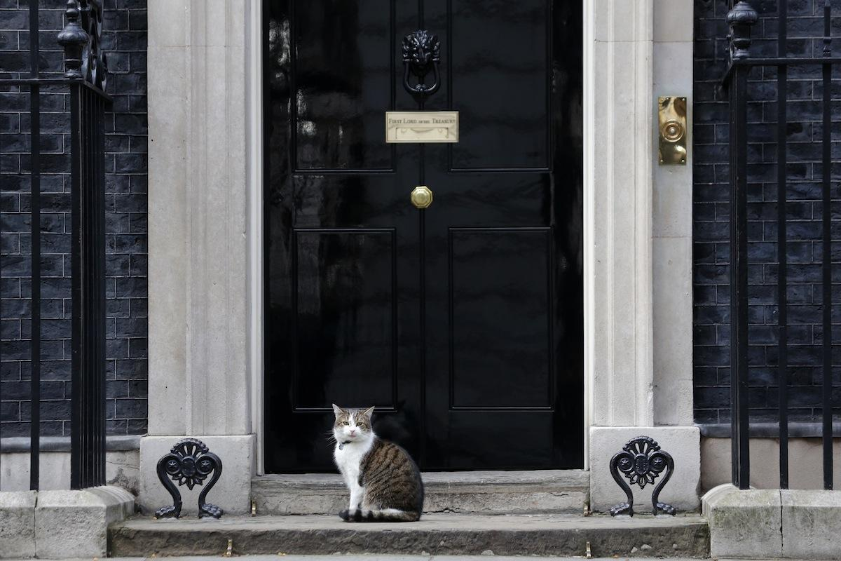 Larry, the Downing Street cat and only suitable leadership at this point. | Source: Daniel Leal
