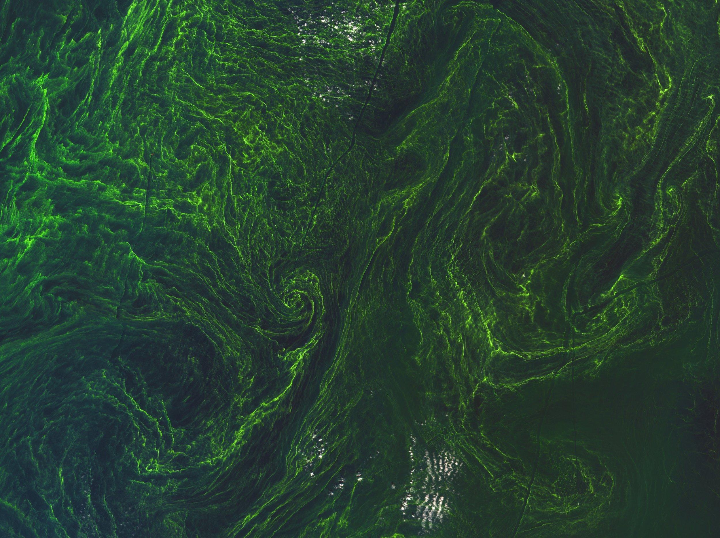 2. Pollution_Algae_bloom_new (1).jpg