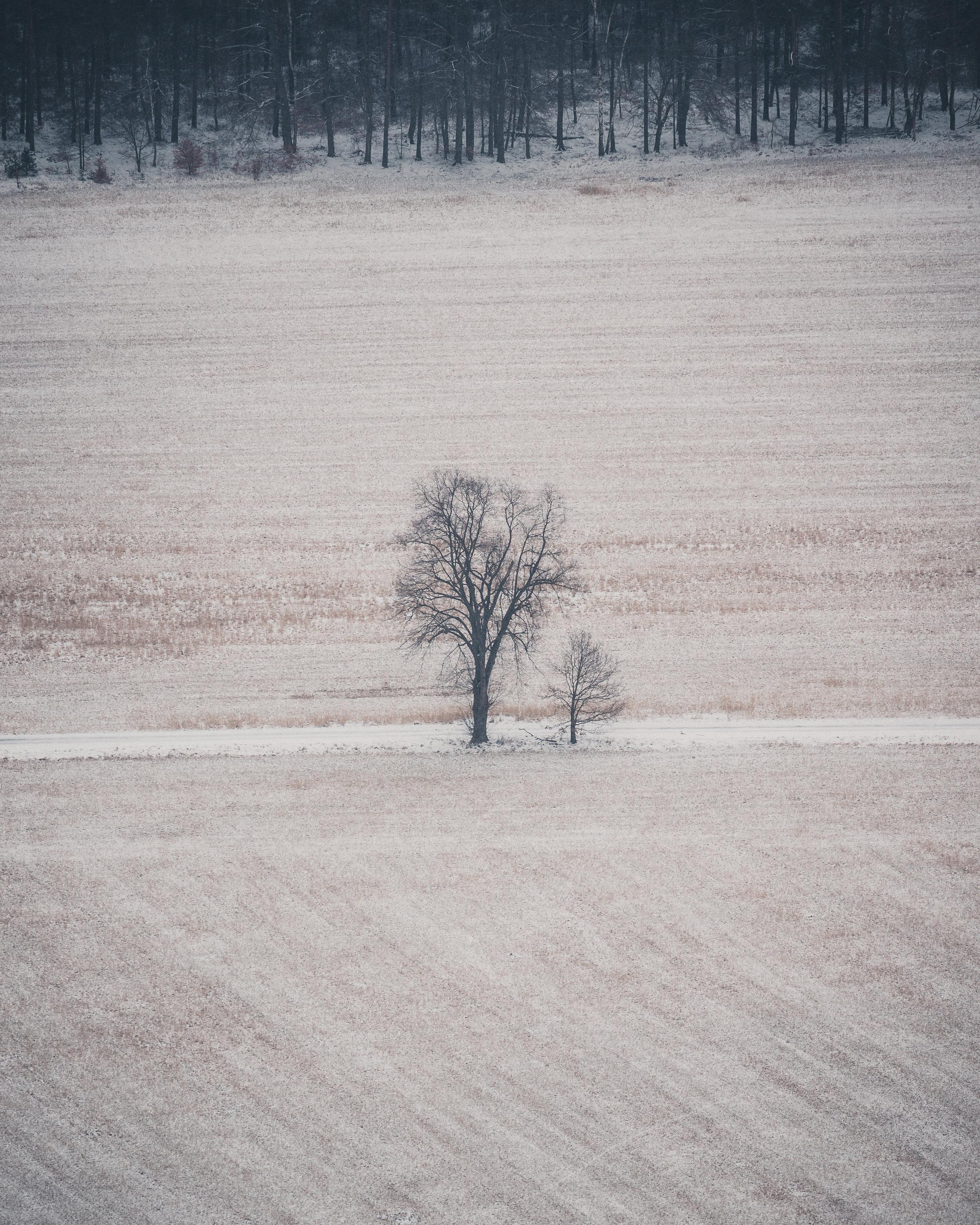 snow_tree.jpg