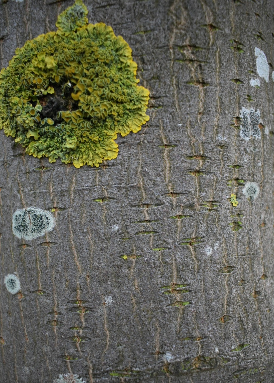 Tree+Closeup.jpg