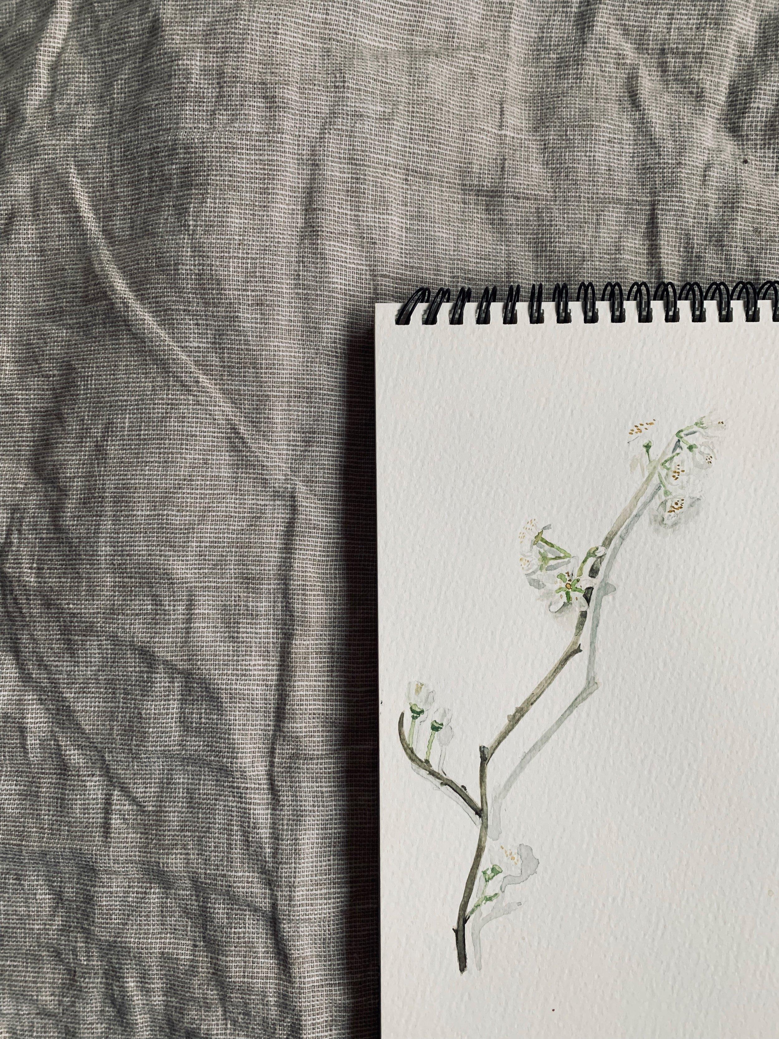 Watercolour Painting Blossom.jpg
