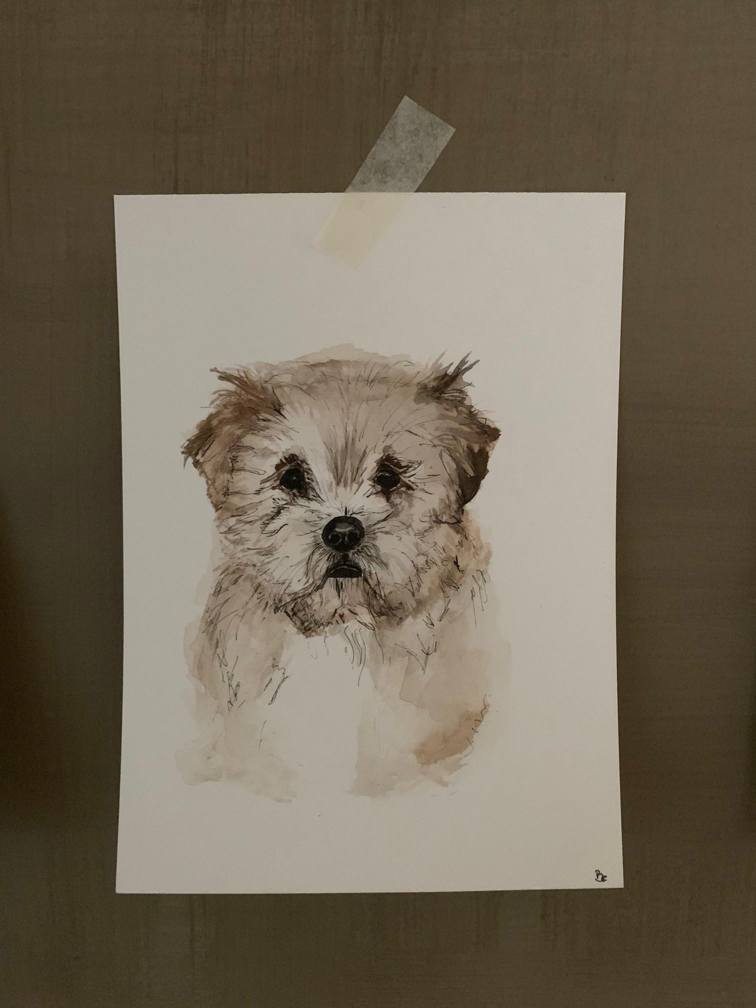 Teddy Watercolour Commision2.jpg