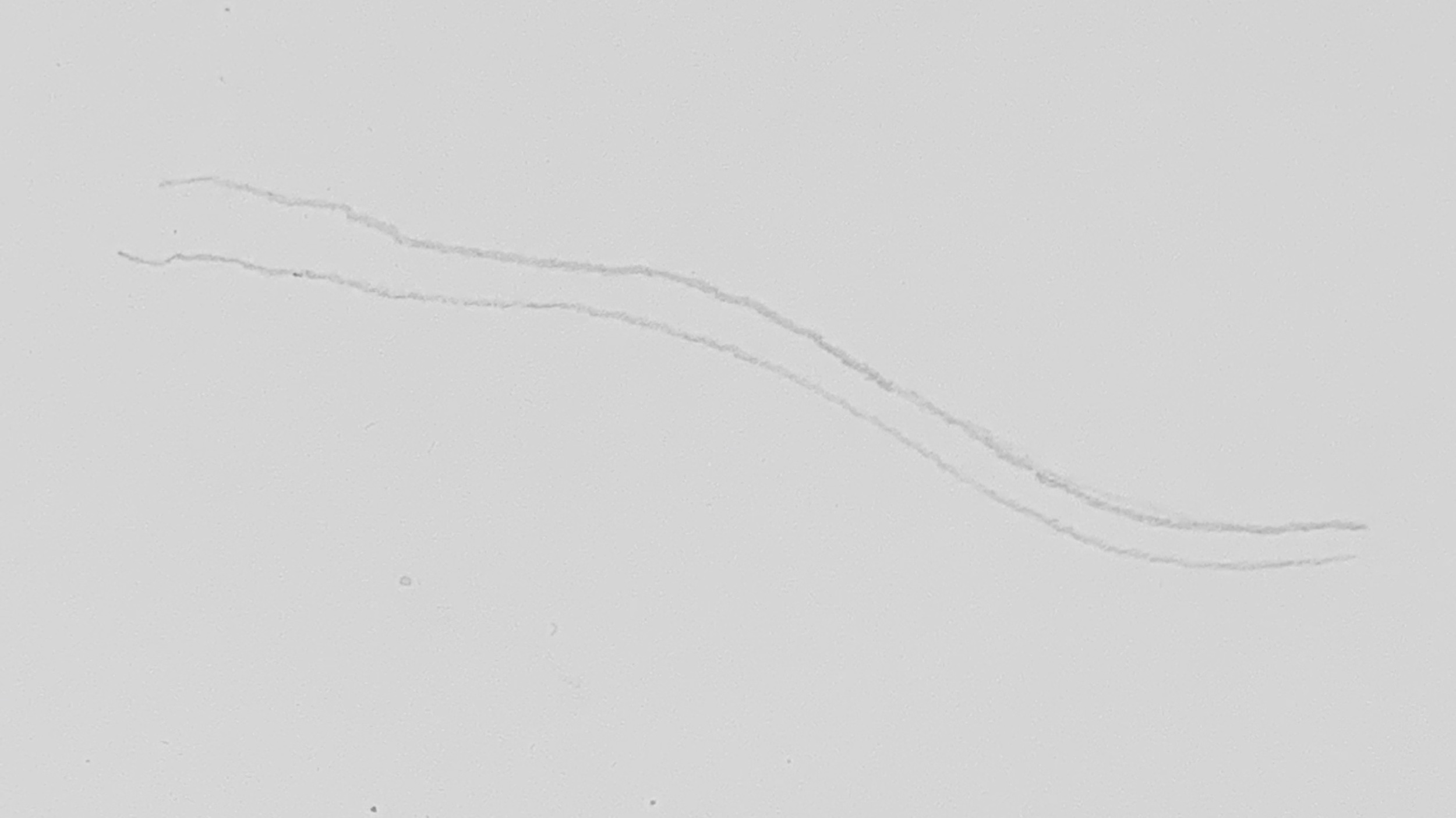 1. Draw the basic shape of the branch you wish to illustrate. Feel free to copy this one