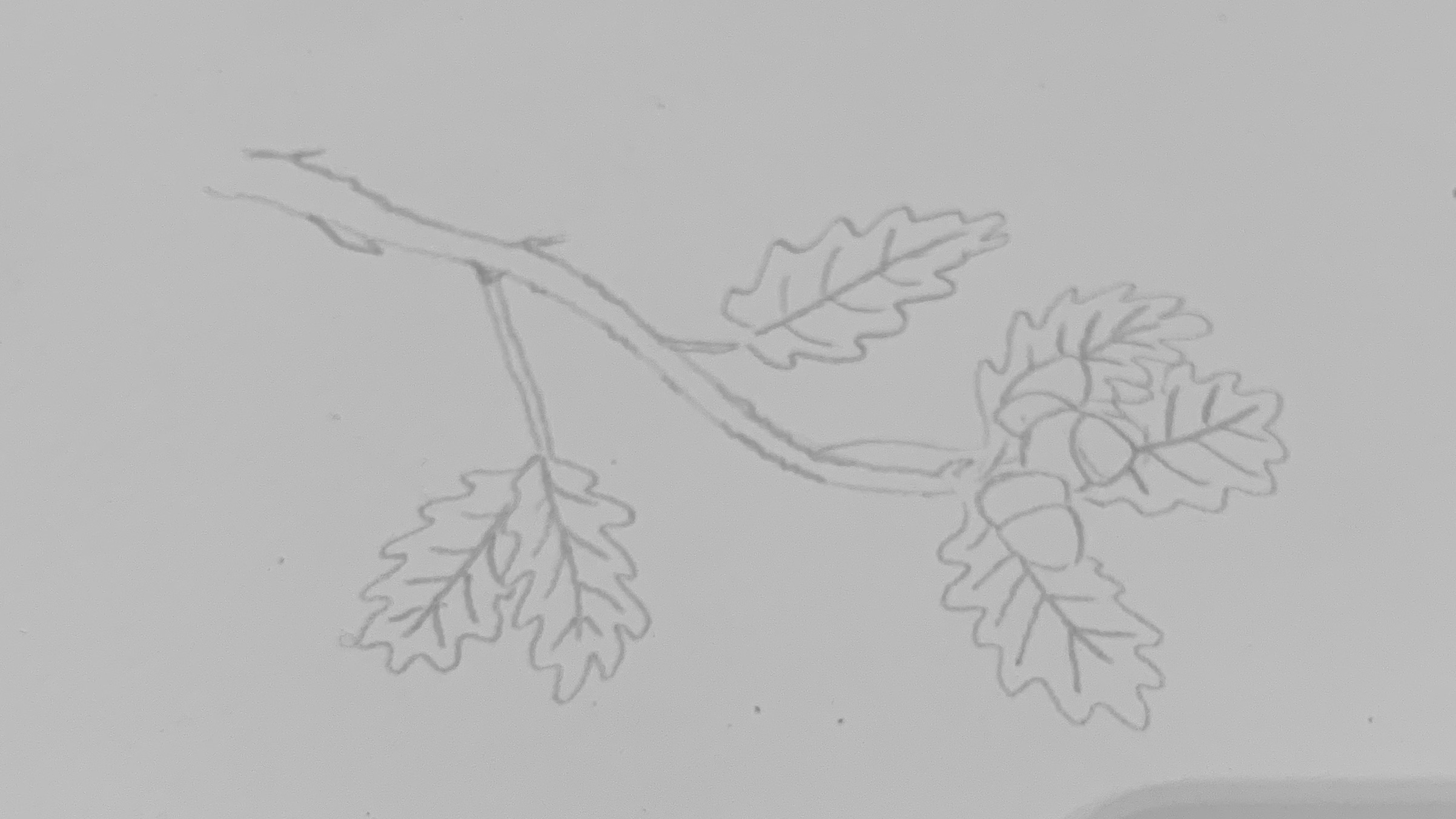 4. Draw acorns and then add leaves behind. Remember to include the veins of the leaves.
