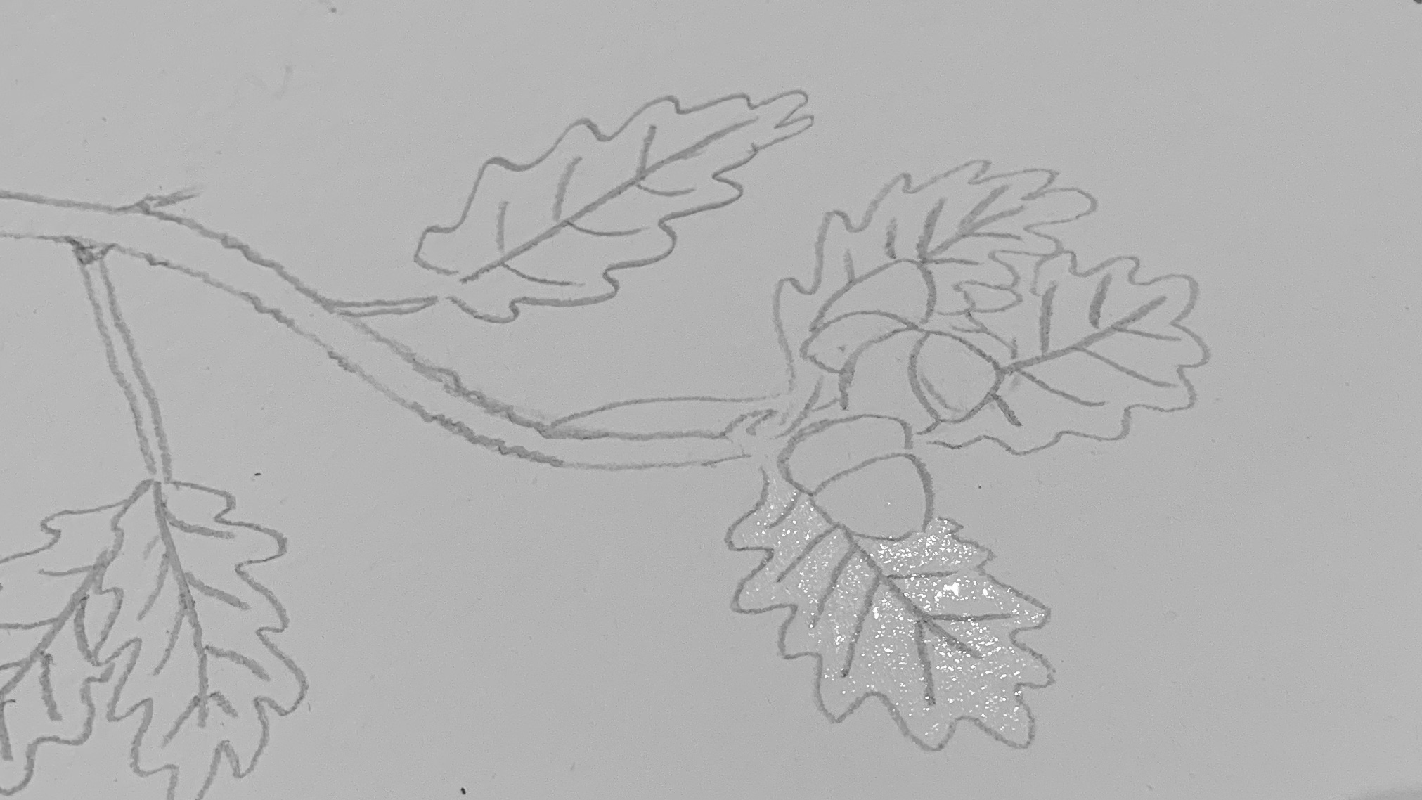 5. Lightly wet one leaf taking care not to wet the pencil lines. (The pencil lines are going to be rubbed out at the end leaving white lines in the leaf and once they're wet they don't rub out very well.)
