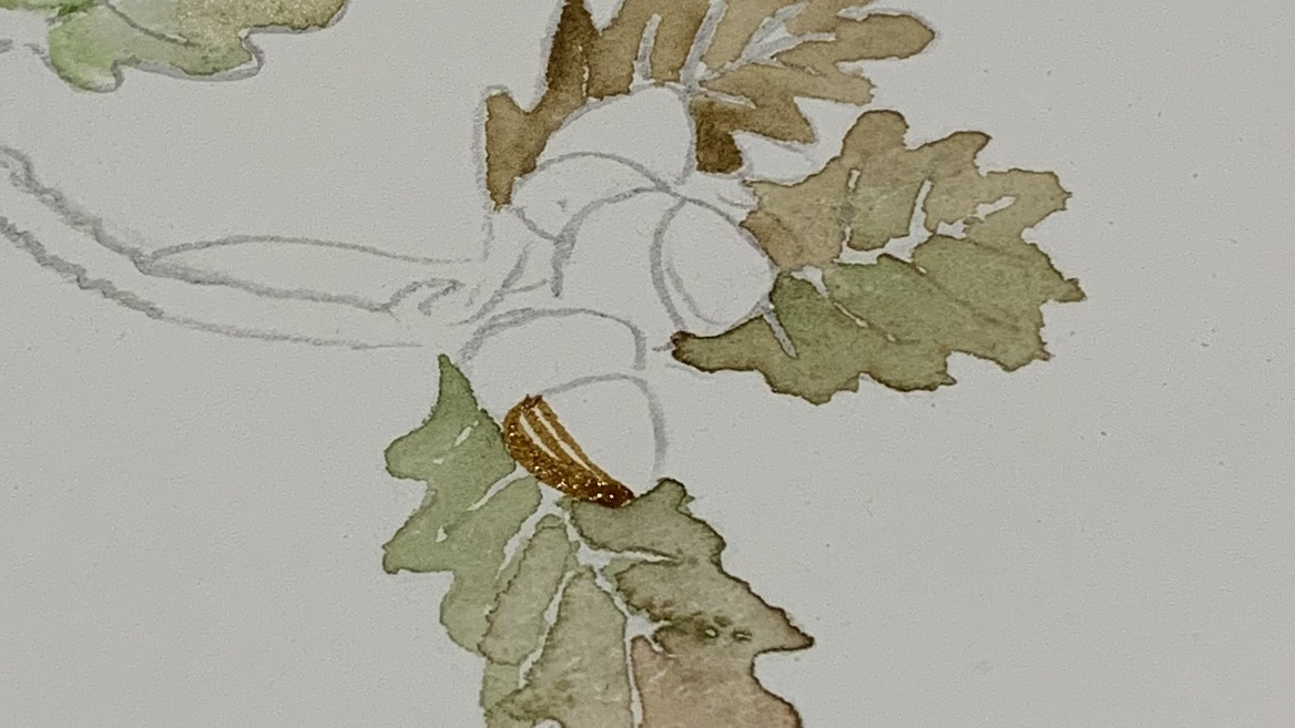 9. For the acorns use a thicker mix of raw umber and paint in lines from the darker side. (Where the shadow would be.) gradually getting more watery as you work across to create light.