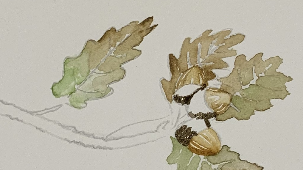 10. Using a mix of black and burnt umber paint in the top of the acorns again from dark side gradually getting lighter.