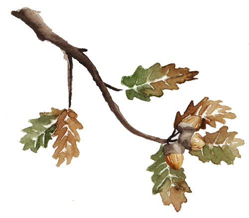 13. Once dry rub out all the pencil lines and bobs your uncle! Autumn Leaves.