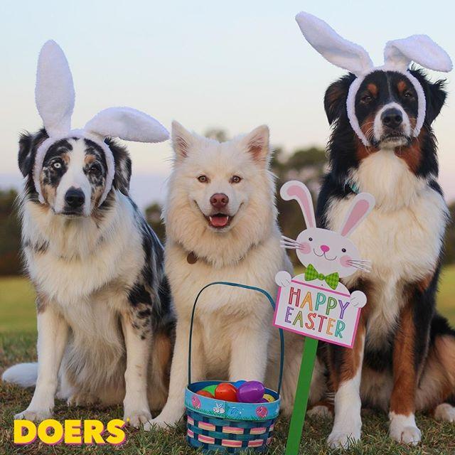 🐥 Glad påsk! 🐥