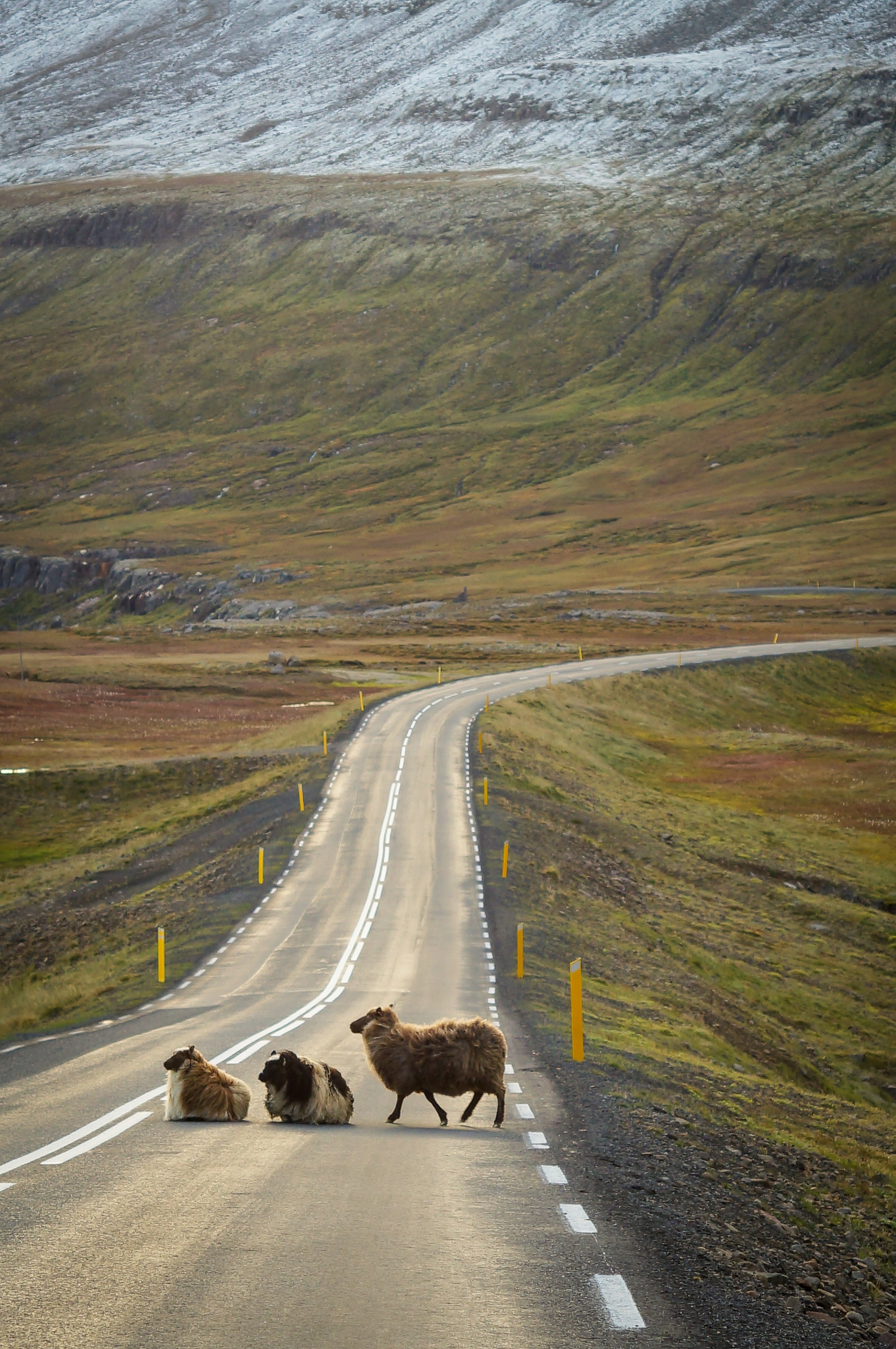 asphalt-countryside-crossing-318427.jpg