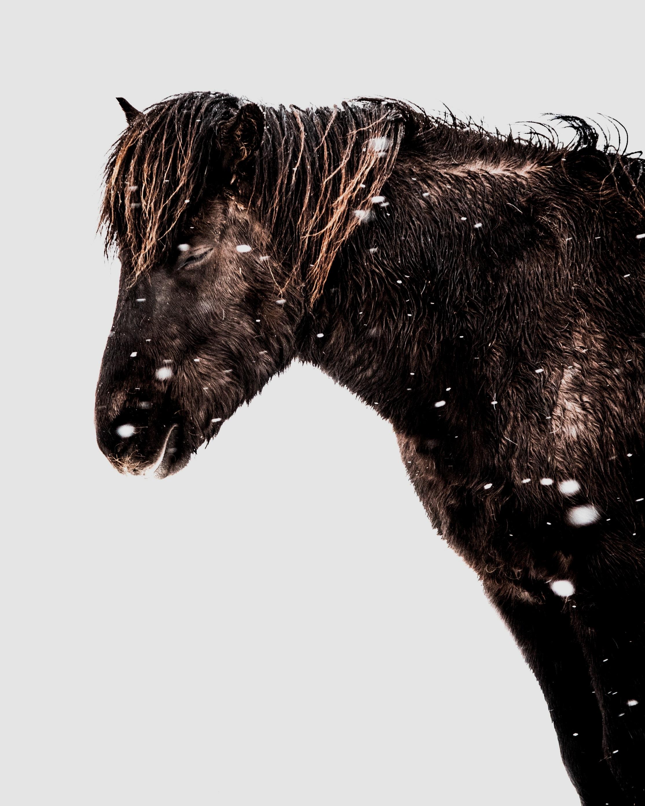 animal-animal-photography-cold-1315701.jpg