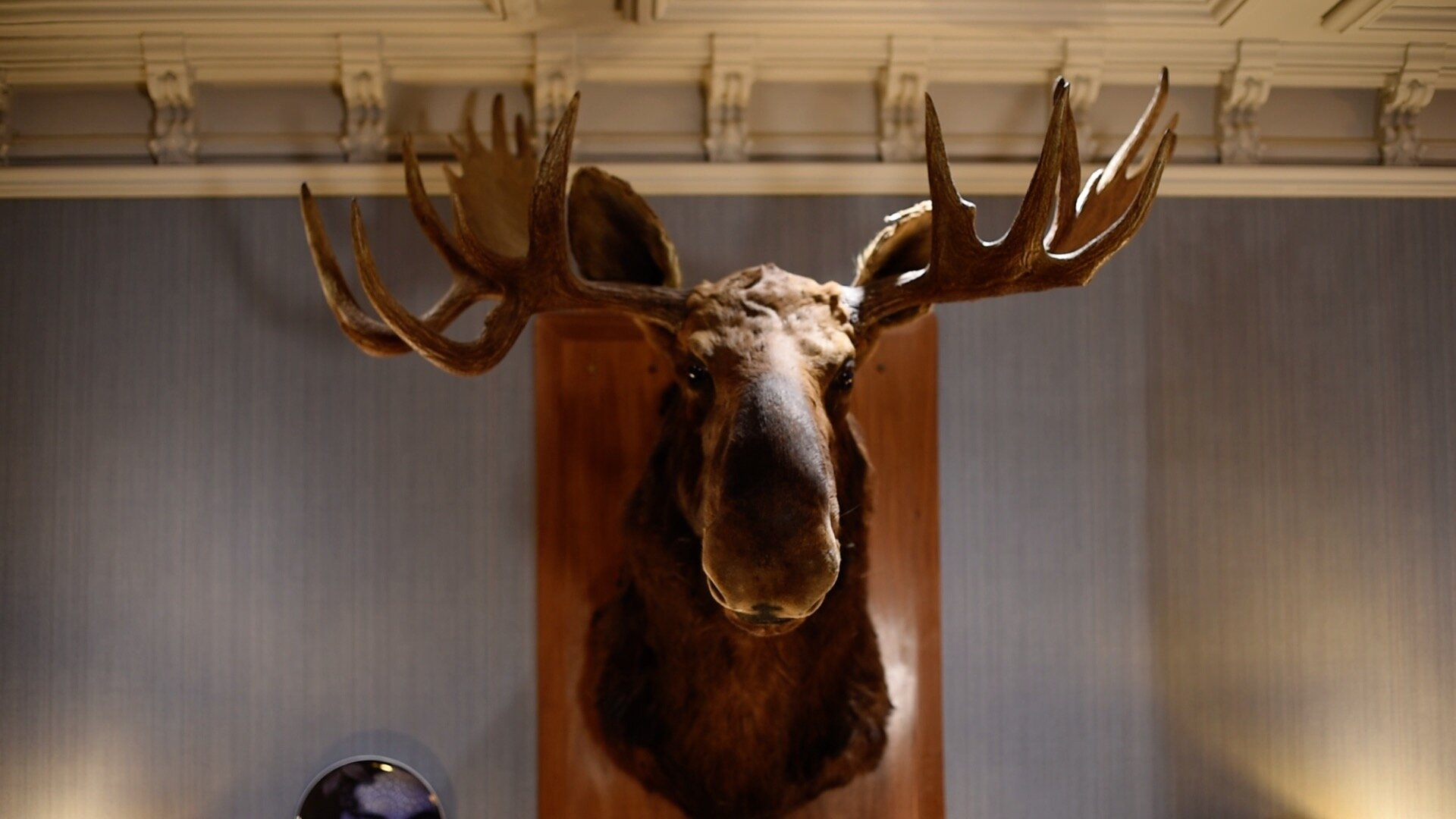 A piece of artwork in the 'Oddfellows on the Park' hotel of a Moose head.