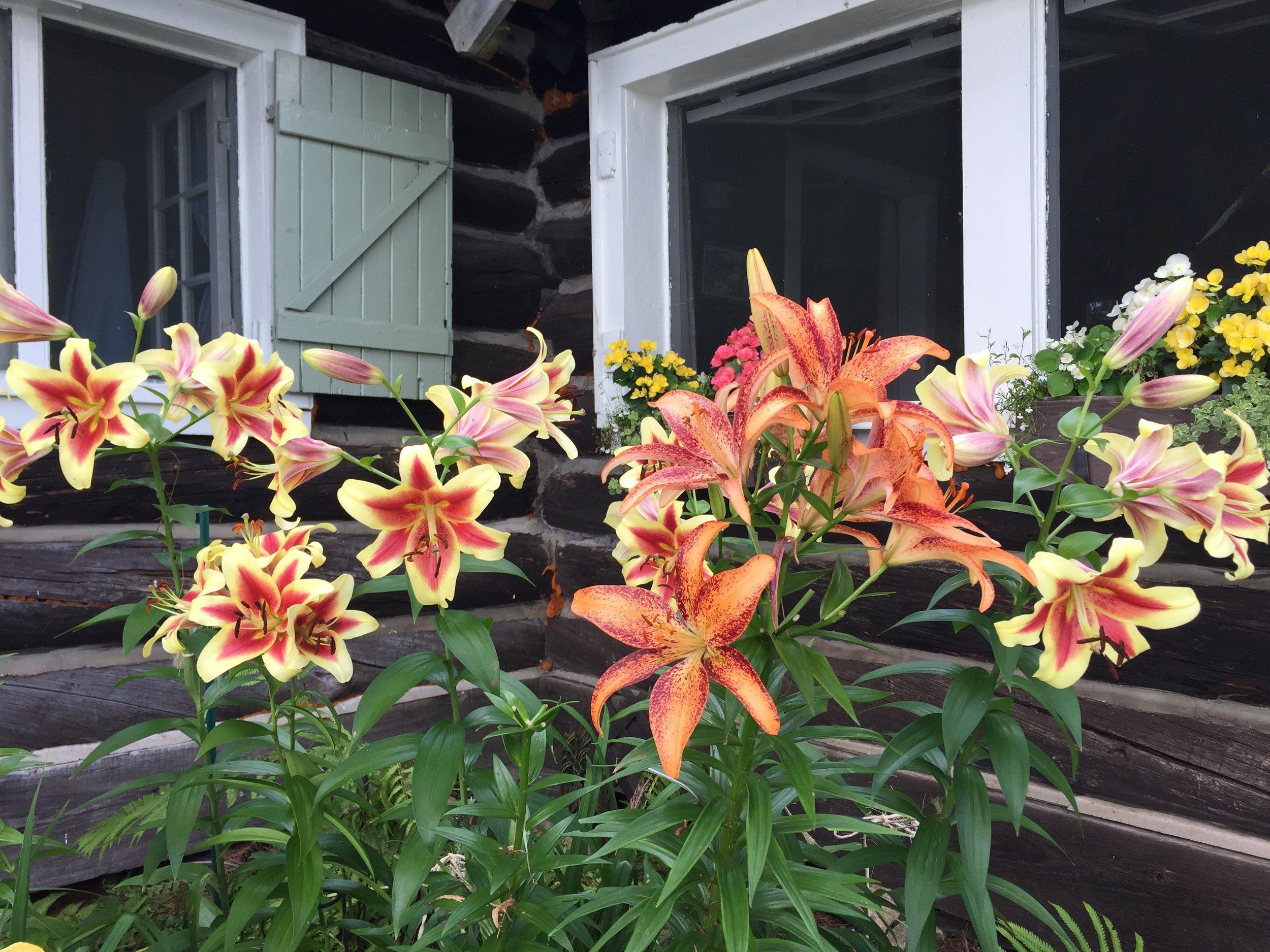 Joan's Flowers