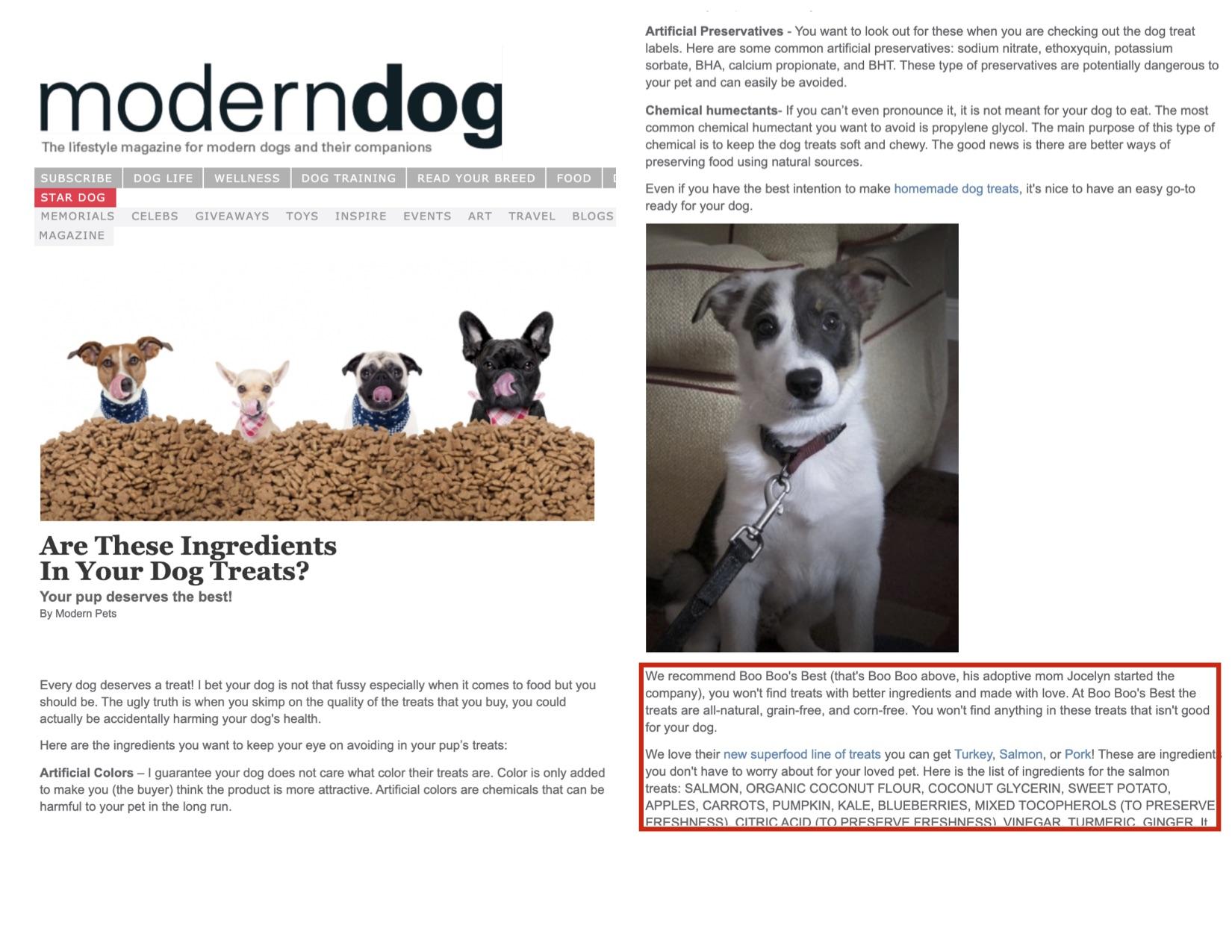 Modern Dog Boo Boo Best Press Article.jpg