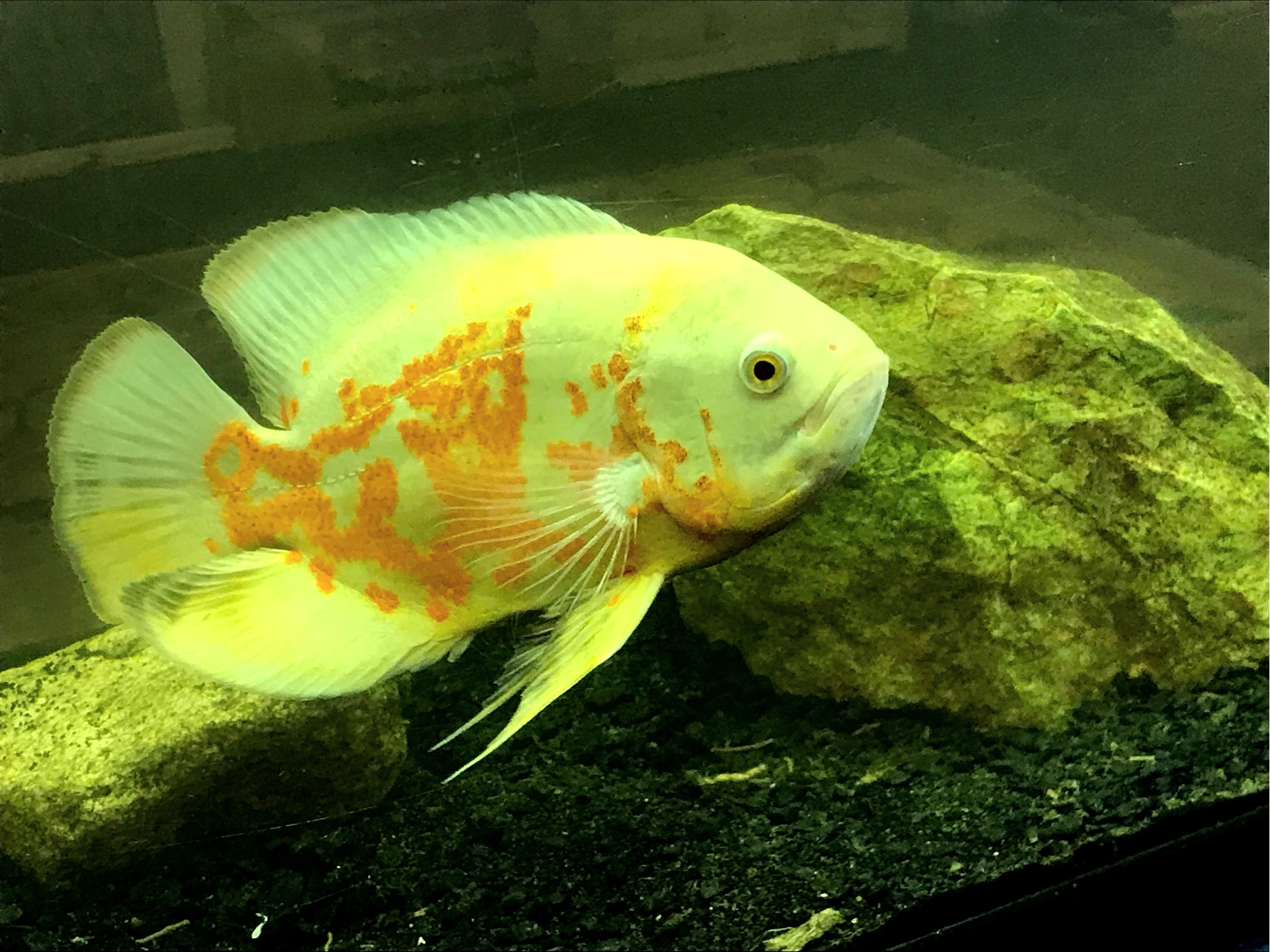 Monday, Wednesday, and Friday - Fish, turtles, toads, salamanders and some reptiles at 4:00 PM!