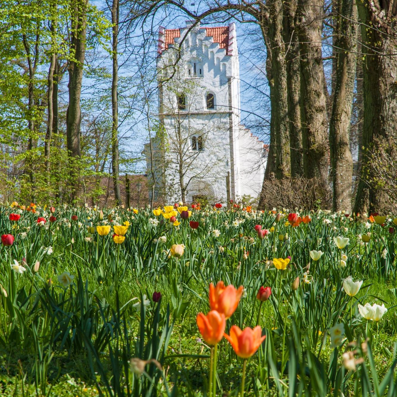 Tulip-field_Tulpanängen-Bosjokloster