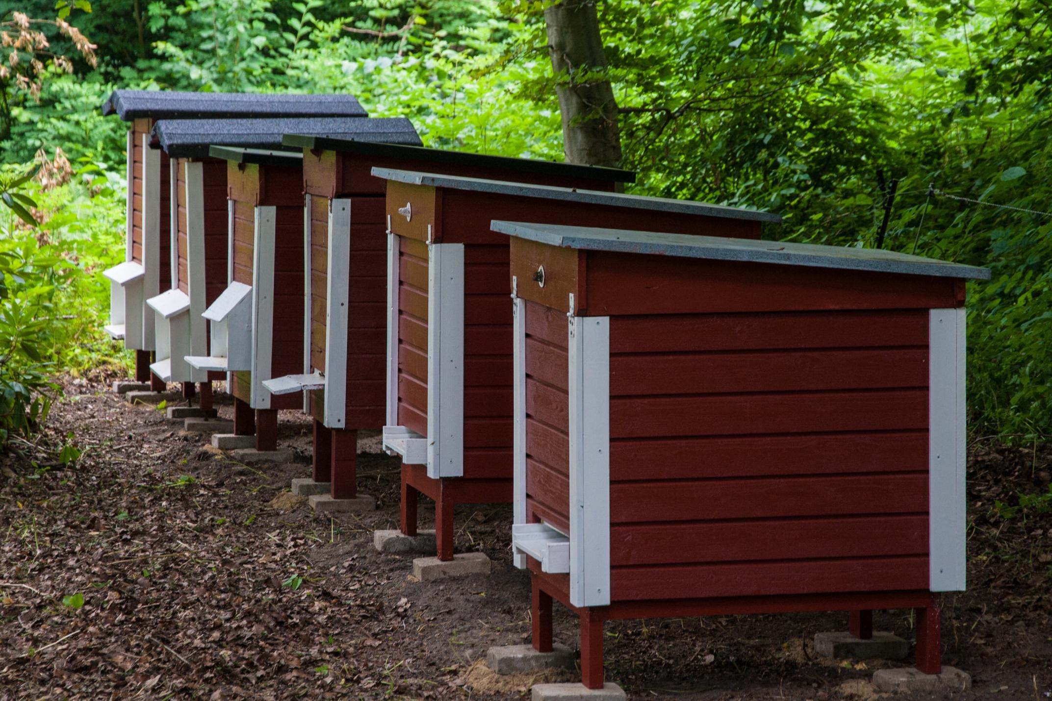 Bee-hives_Bikupor-Bosjökloster.jpg