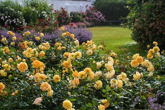 rose-garden_rosengarden-Bosjokloster.jpg