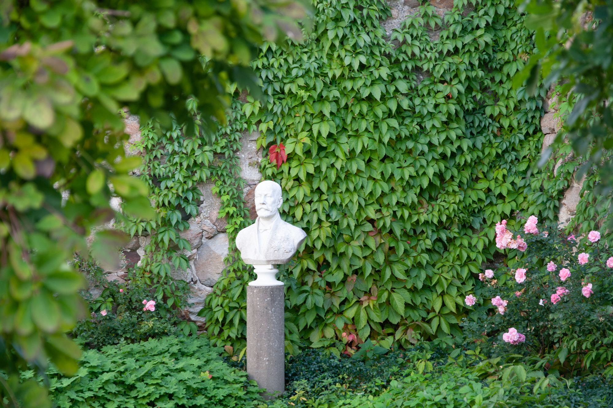 In the Memorial Yard, you will find the Rose Stenchen, now renamed 'Bosjökloster'. It has bloomed here since 1908.