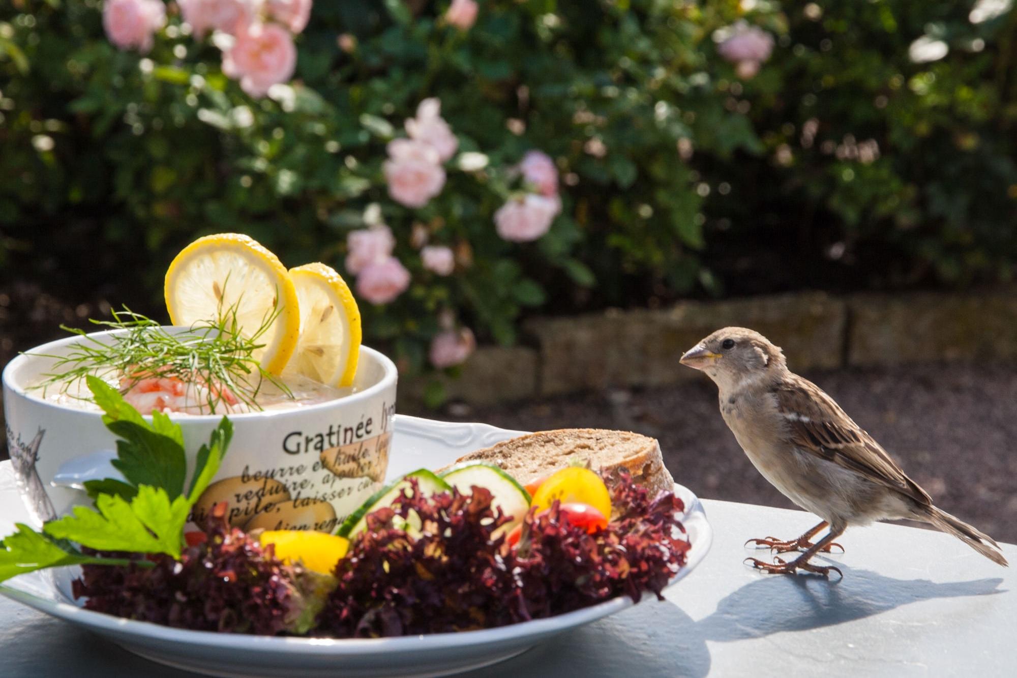 Garden Café -