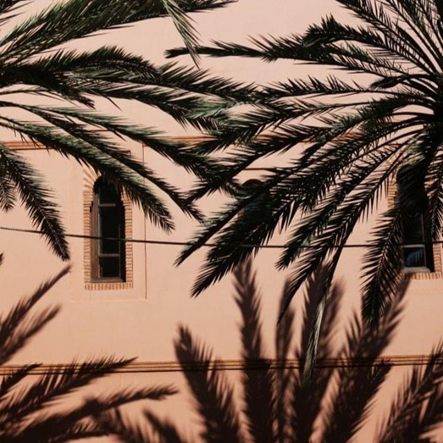 Peachy Palms.⠀⠀⠀⠀⠀⠀⠀⠀⠀ ⠀⠀⠀⠀⠀⠀⠀⠀⠀ ⠀⠀⠀⠀⠀⠀⠀⠀⠀ Photo: @madamemonges⠀⠀⠀⠀⠀⠀⠀⠀⠀ ⠀⠀⠀⠀⠀⠀⠀⠀⠀ ⠀⠀⠀⠀⠀⠀⠀⠀⠀ #alaplagecollection #inspiration #aesthetic #liveauthentic #palms #summer #smile #paradisefound #passionport #styleinpo #travel #doyoutravel #chasinglight #sunshine #goldenhour #colorstory #traveldiaries #photography #paradise #instagood #flashesofdelight #lifestyle #wanderlust