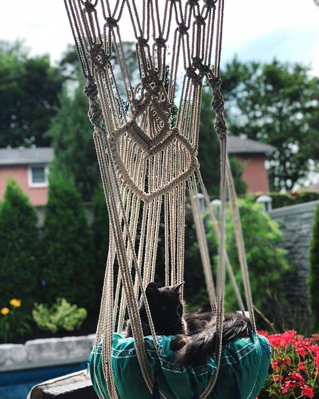 Kween Felicia enjoying her new hammock ✨ @misskittyfelicia