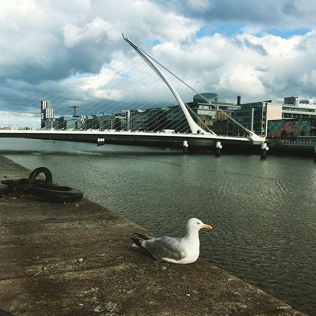 Thank you mate for not flying away!!! #dublin #bridges
