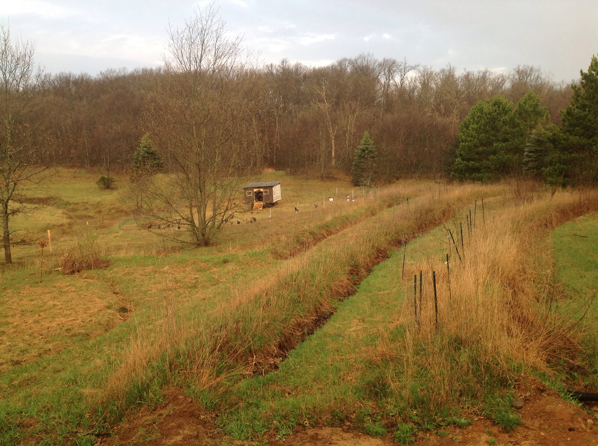 A view of the swales and beginning food forest behind the house with the eggmobile in the background!