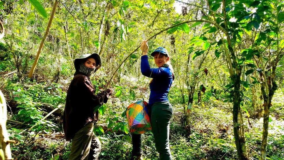 harvest volunteers.jpg